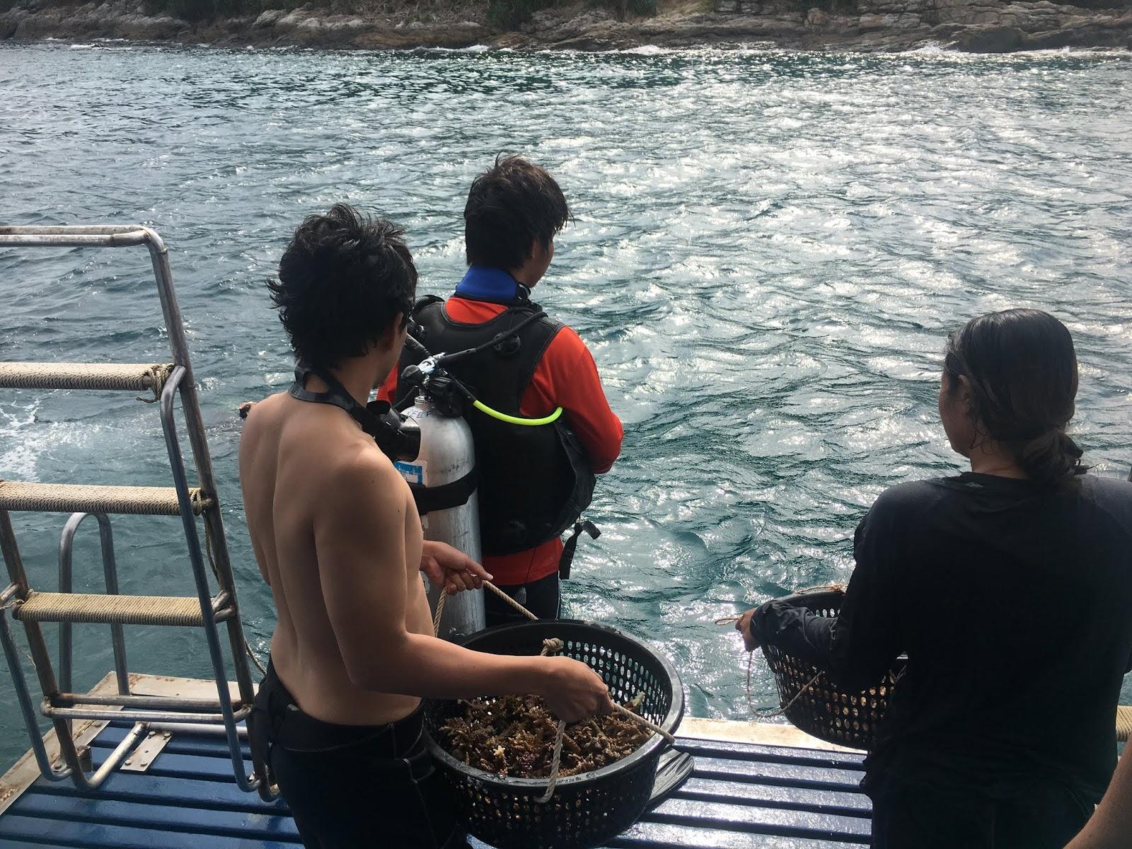 โครงการปลูกปะการัง