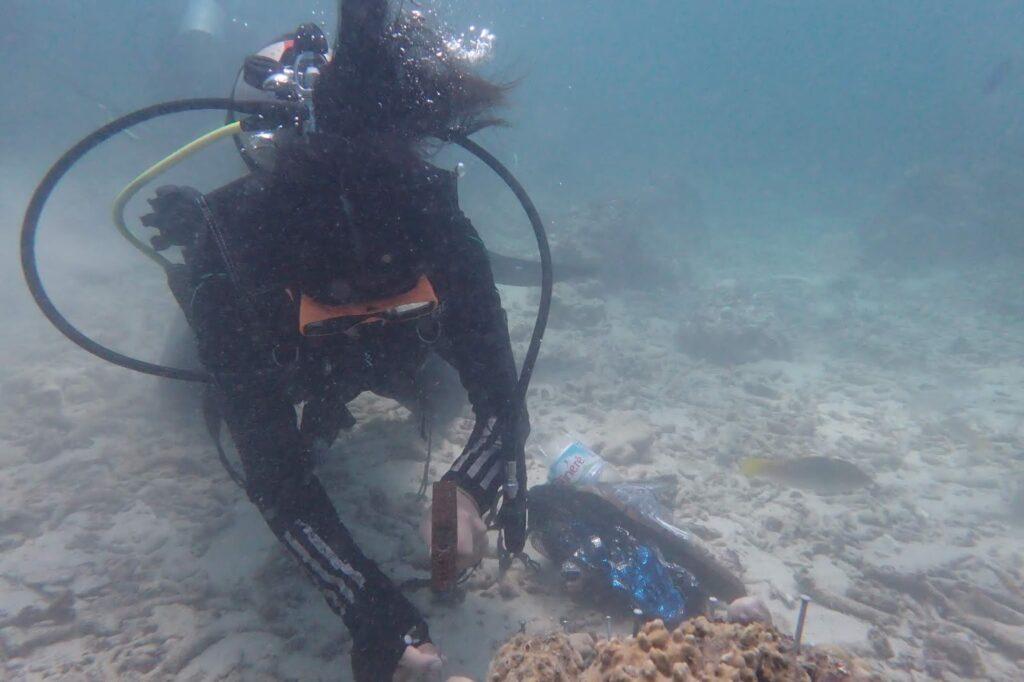 ดำน้ำปลูกปะการัง
