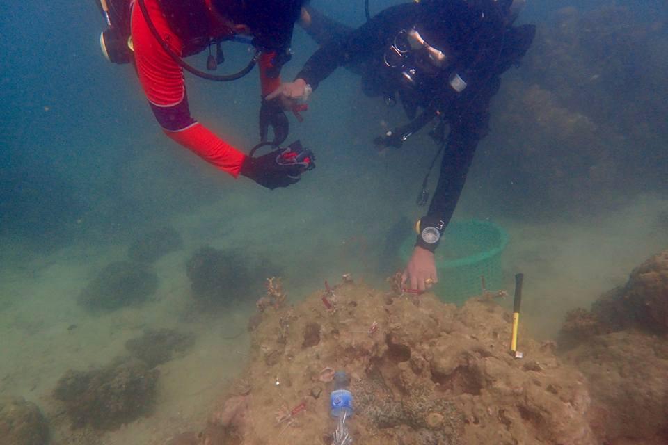 การใช้อีพ็อกซี่ยึดฐานปะการัง