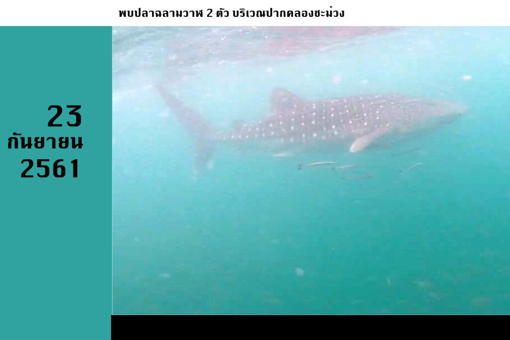 whalesharksep2361