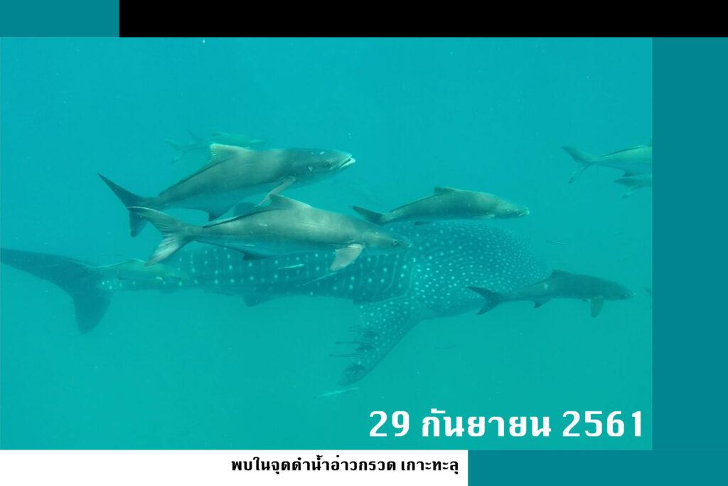 whalesharksep61