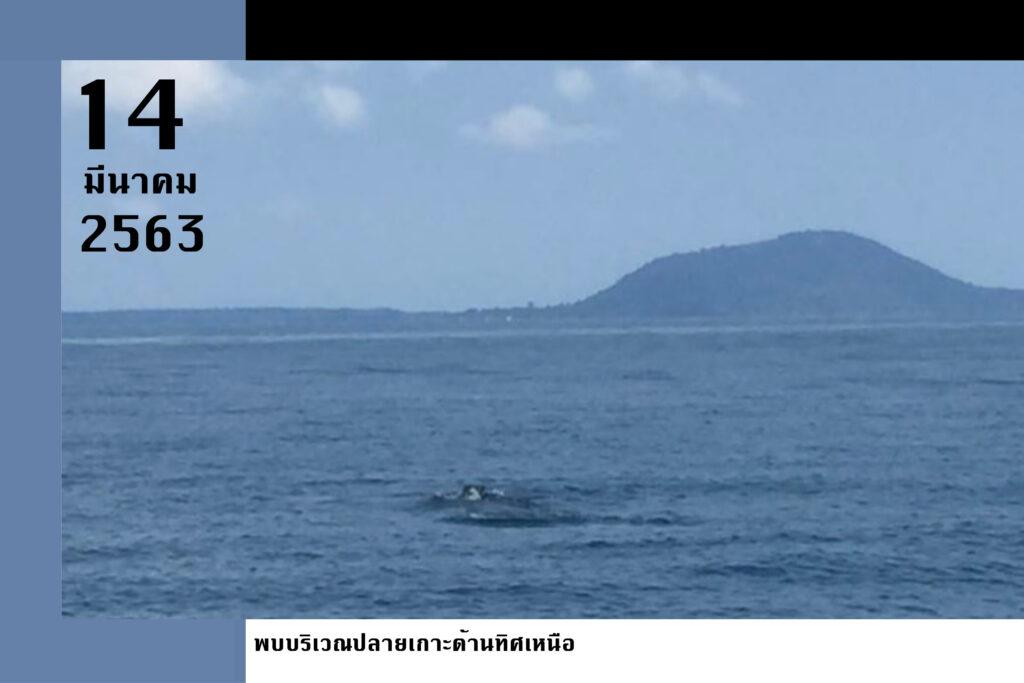 Whalesharkmar